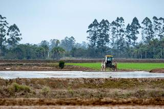 Safra produção de arroz