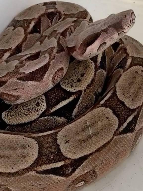 Cobra na casa de Ivete Santalo
