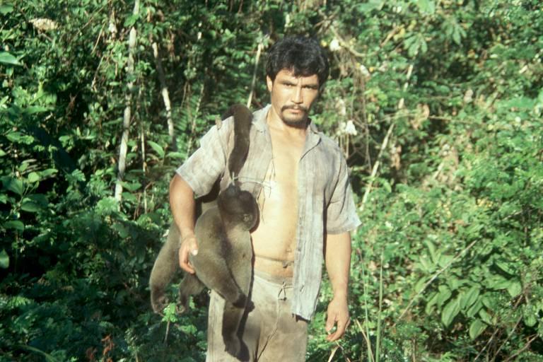 A carne de macacos-barrigudos é cobiçada pela carne para consumo