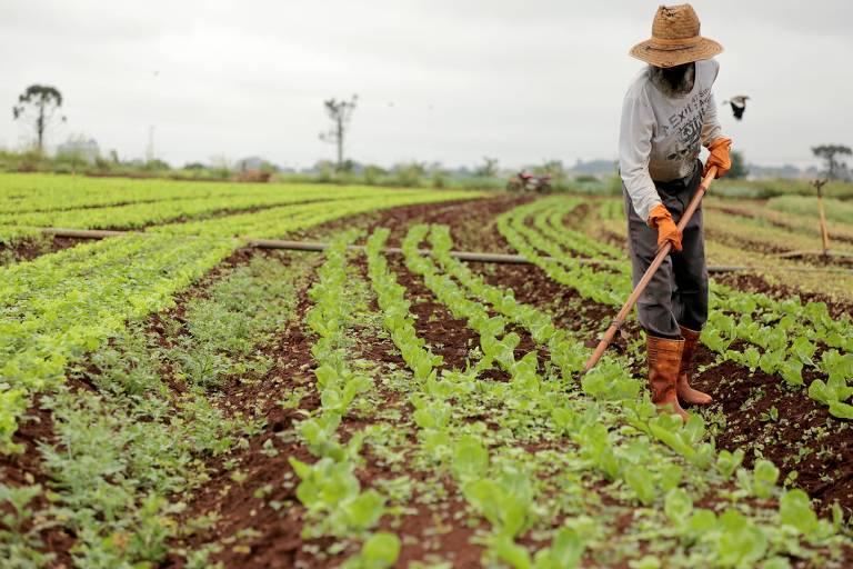 Trabalhador de hortifrutigranjeiros de Campo Mourão, na região centro-oeste do Paraná