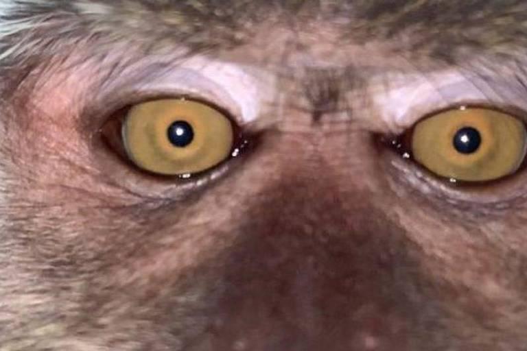 Após recuperar celular perdido, estudante encontra selfies de macaco no aparelho