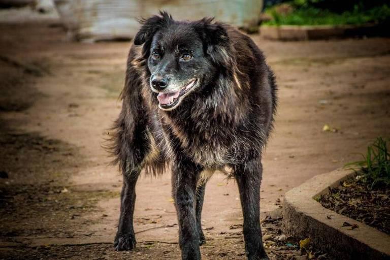 Cachorra Ursa, peluda e de pelos pretos, do morador de rua Nelson
