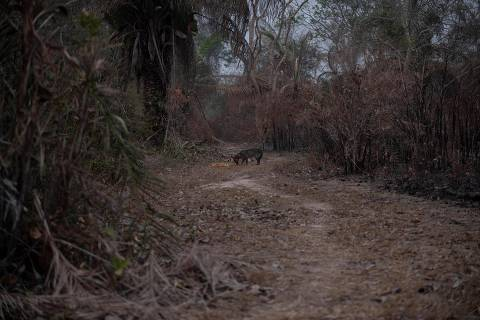 Ministro sugere que Bolsonaro levou chuva a MT; deputado diz que não viu água no Pantanal
