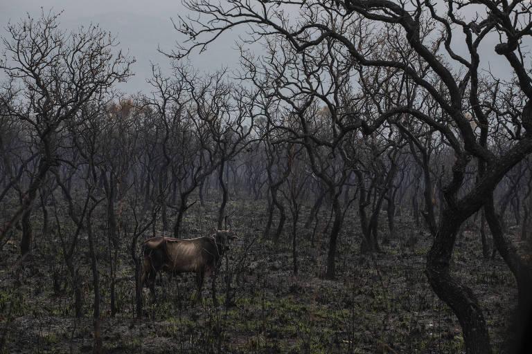 Com Pantanal em chamas, governo do MT promove turismo na região