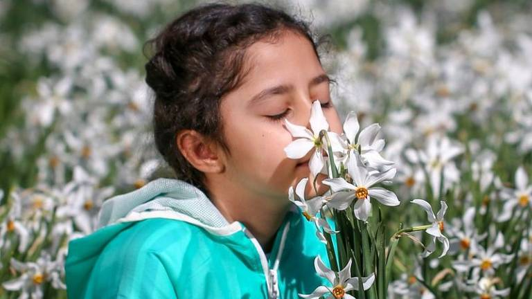O coronavírus e a perda do olfato