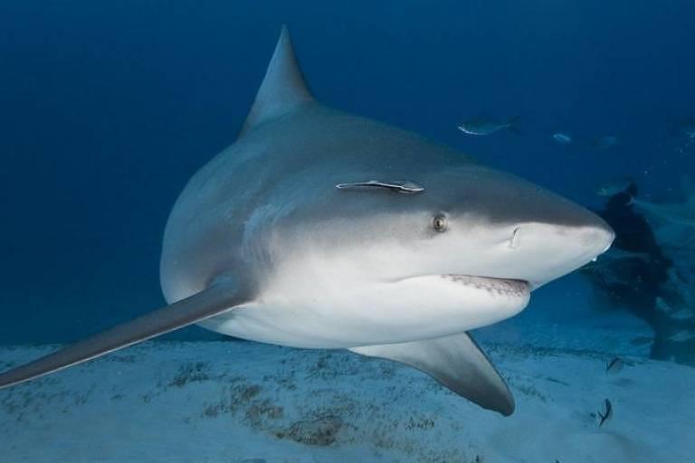 Tubarão de dois ou três metros foi visto por testemunhas no mesmo dia do incidente