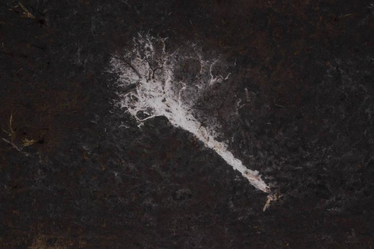 Cinzas de uma arvore totalmente queimada marcam um pasto devastado pelo incêndio que atingiu a fazenda São Francisco, do pecuarista Pedro Oliveira Rodrigues, no município de Santo Antonio de Leverger.