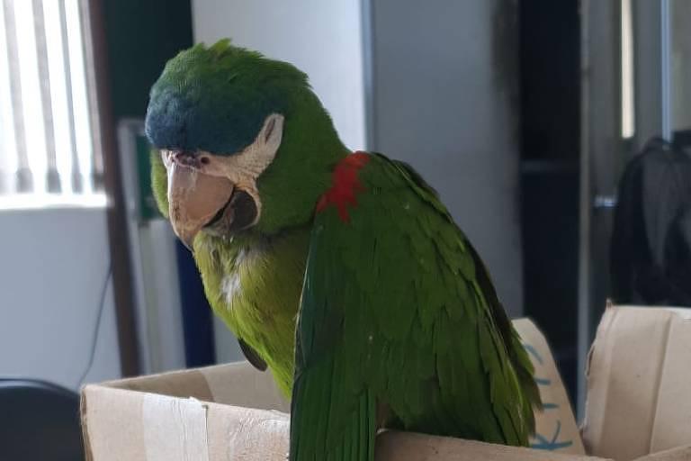 Papagaio da espécie Maracanã salvo por agente do Metrô