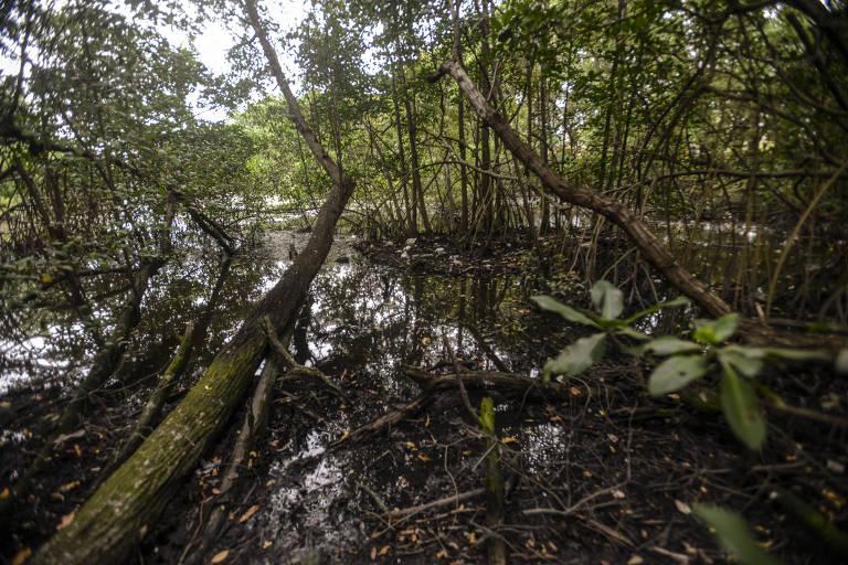 Mangue no Espaço Ciência, no Complexo de Salgadinho; o ecossistema dos mangues do Recife, dos quais a maior porção é o Parque dos Manguezais, encontra-se ameaçado pela revogação de resoluções do Conama; vemos um braço de água com muita vegetação na superfície e à sua volta