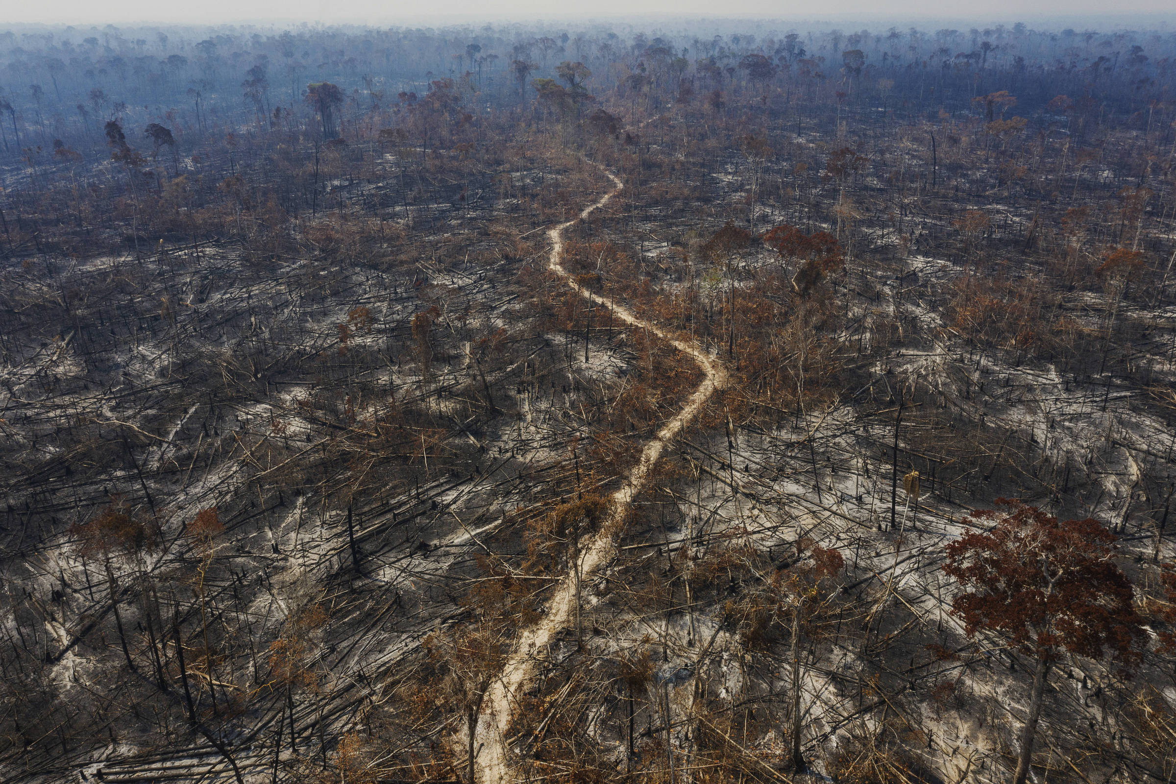 Estrada serpenteia em meio a terra queimadas com árvores caídas