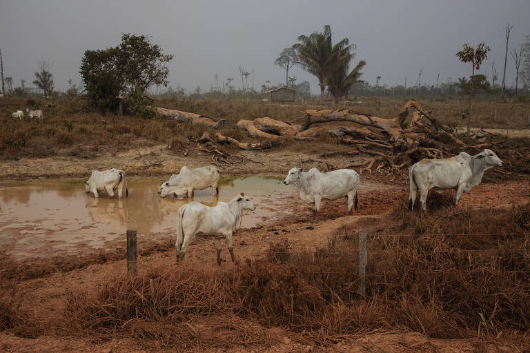 Ministério da Agricultura investiga caso suspeito de vaca louca no Brasil
