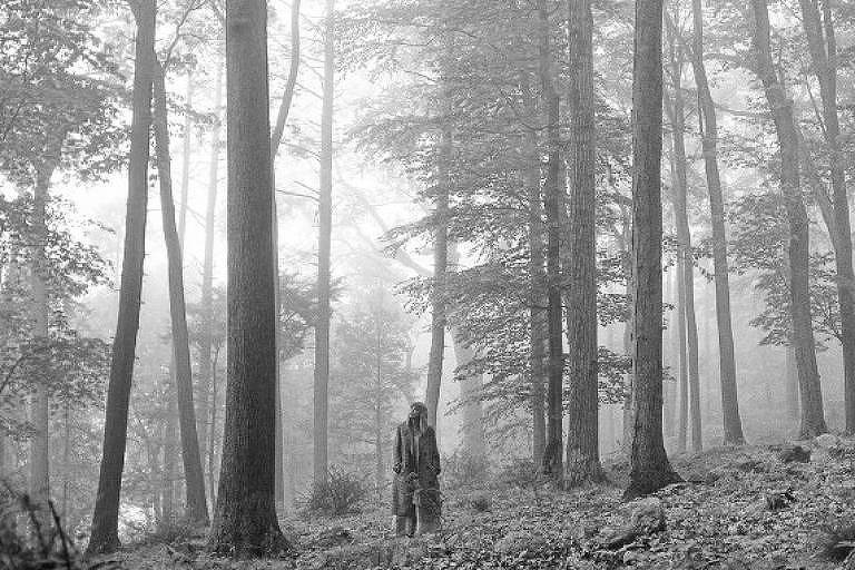 taylor swift no meio de uma floresta de árvores altas