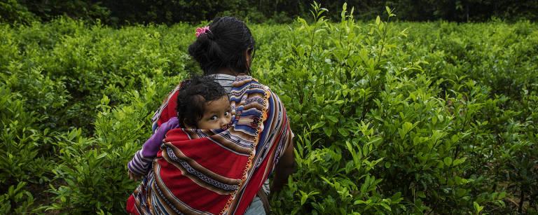 Mulher de cabelos pretos caminha de costas para a câmera em meio a plantas de coca verdes, com tecido colorido amarrado nas costas onde se vê uma criança, que olha para a câmera