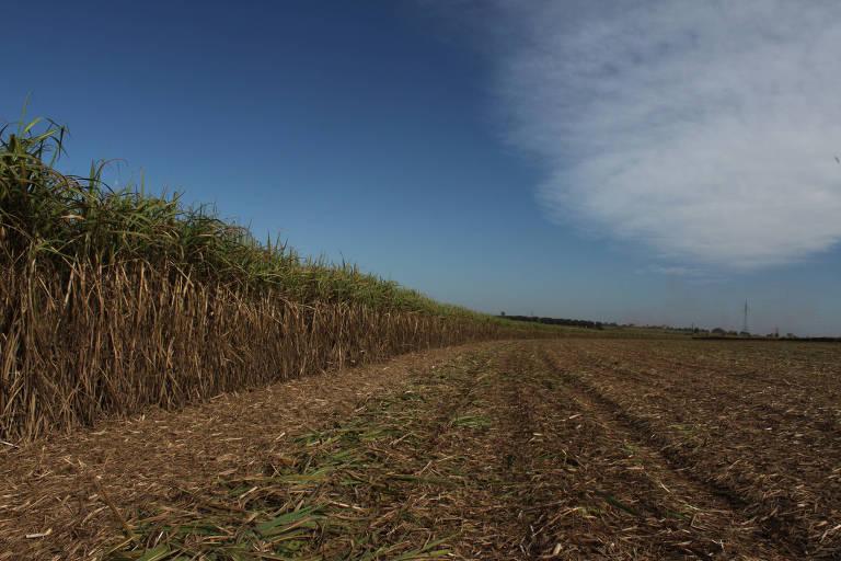 Vista de colheita de cana-de-açúcar