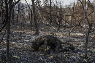 Macaco carbonizado em incêndio na serra do Amolar, no Pantanal