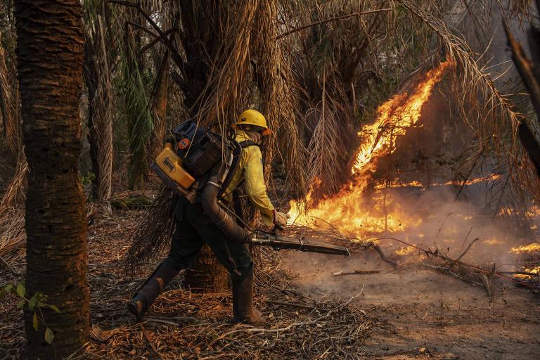 Brigadista combate fogo em floresta com um soprador.