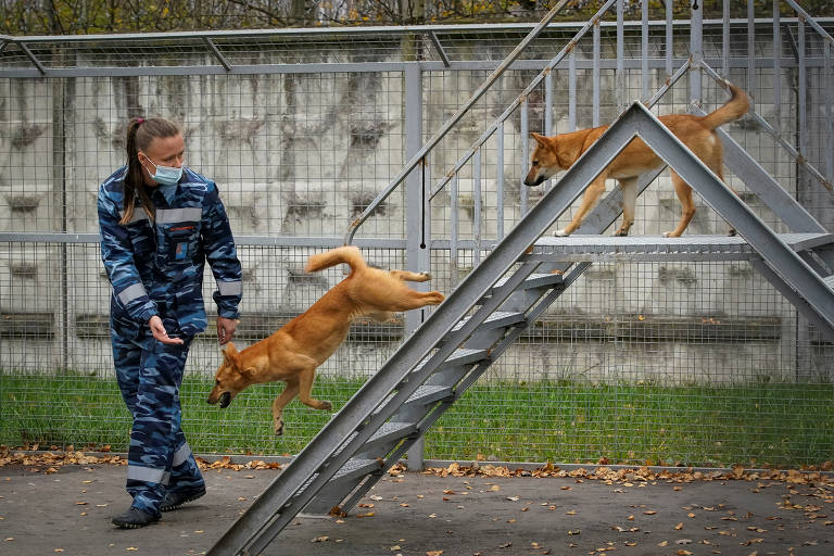 Profissional do serviço canino da empresa aérea Aeroflot com cães treinados para detectar o coronavírus na Rússia