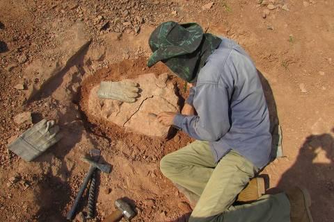Paleontólogos encontram fóssil quase completo de ave da Era dos Dinossauros no interior de SP