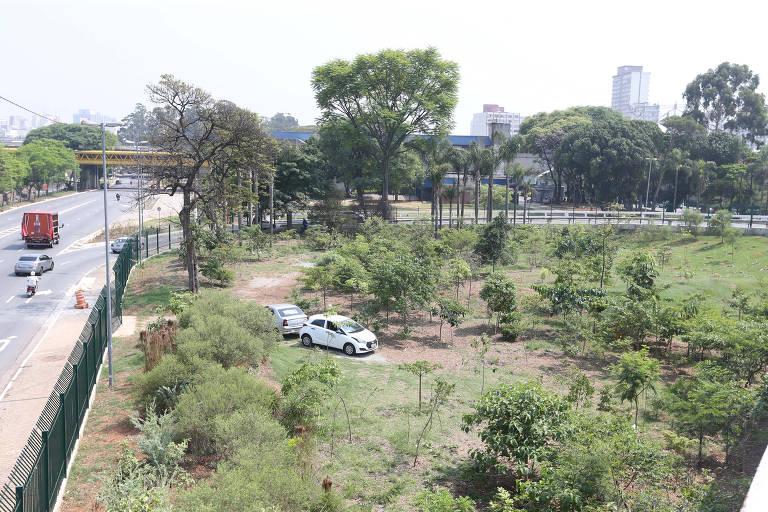 Árvores do Anhangabaú são replantadas na região central