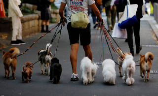 Dog walker Nobuaki Moribe takes a walk with dogs in Tokyo