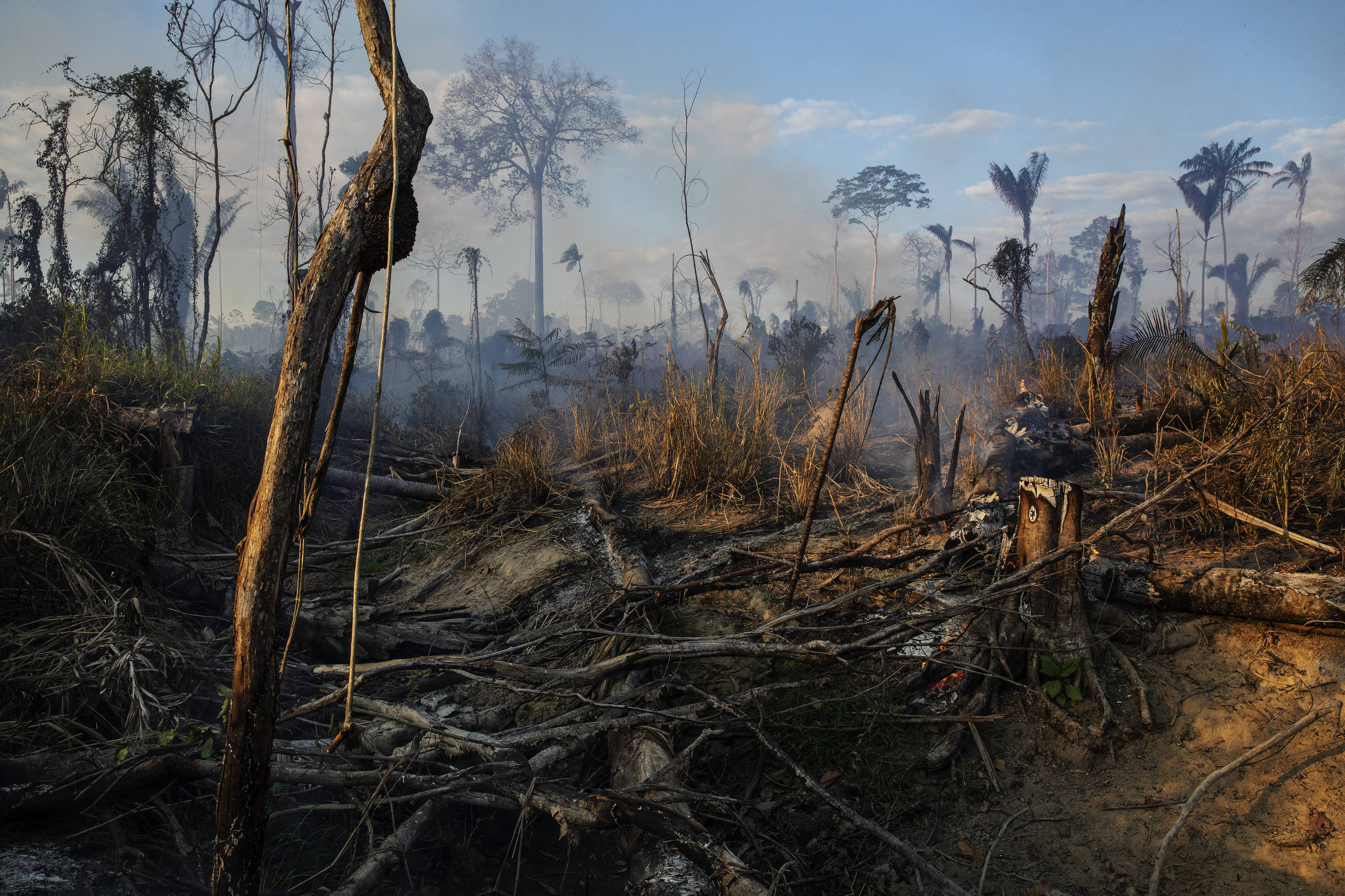 Árvores de floresta queimadas ainda produzindo fumaça