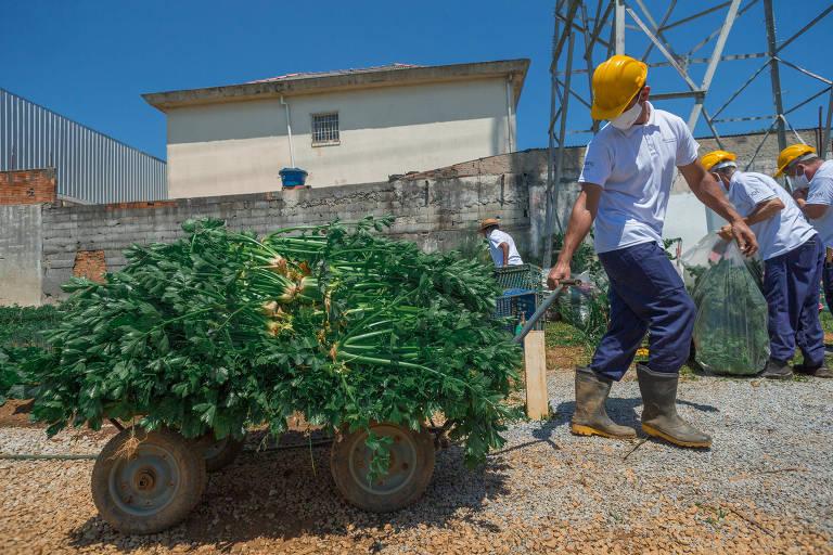 Comunidade de Paraisópolis recebe 11 toneladas de alimentos de doação