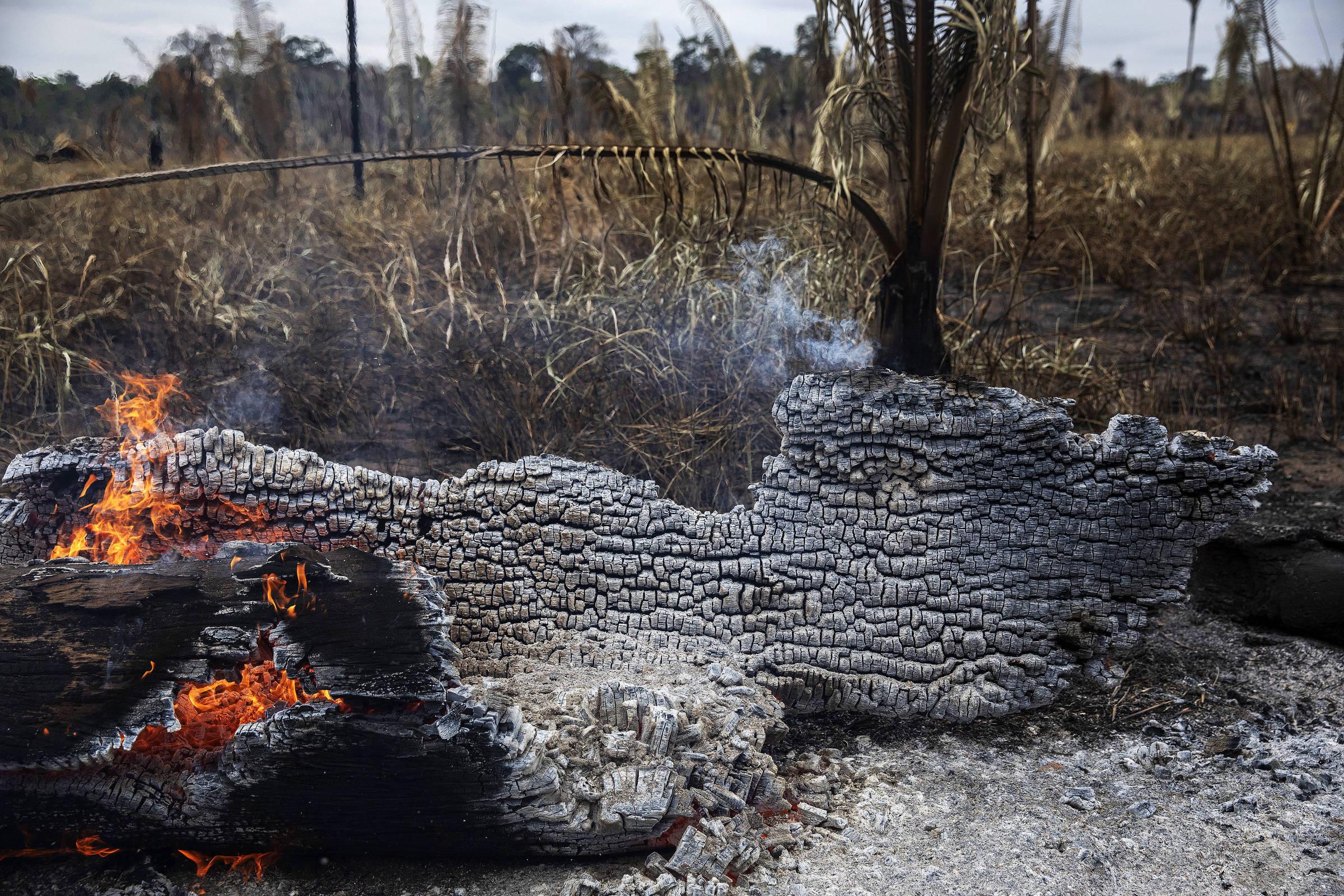 Árvore queima na Floresta Nacional Bom Futuro