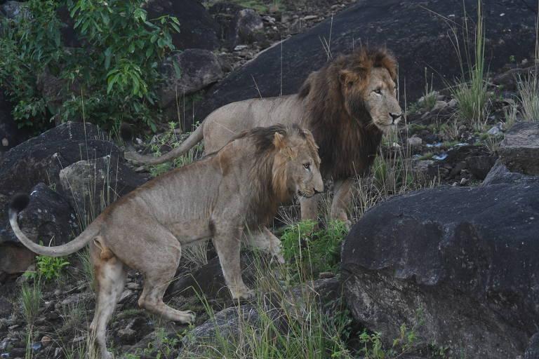 Uganda reabre parques nacionais após impacto da pandemia; veja fotos de hoje
