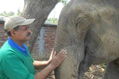 Sharma calcula ter tratado mais de 10 mil elefantes