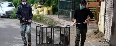 In this photograph taken on August 30, 2020, officials from the Forest Department of Shimla carry a cage with two monkeys inside caught from a residential area in Shimla. - Thousands of monkeys are menacing the historic Indian city of Shimla, where sterilisations and illegal poisonings have failed to blunt their frequent attacks on tourists and farms. (Photo by Money SHARMA / AFP)