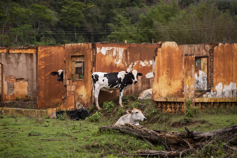 Samarco e Fundação Renova: o outro lado da moeda