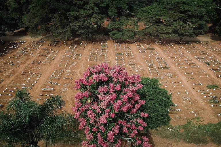 vista aérea de centenas e centenas de covas rasas, cavadas em terra marrom batida; ao centro, uma árvore com flores rosas em meio ao cemitério