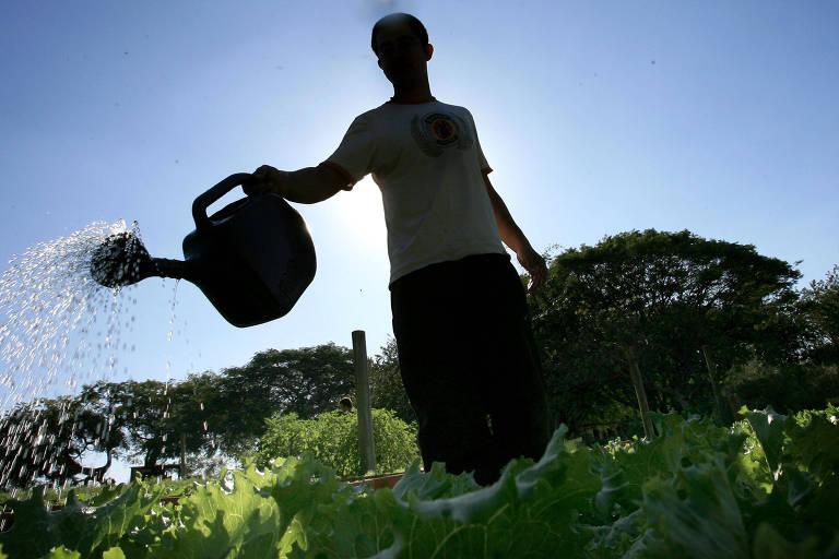 Homem, no contraluz, com o sol às suas costas, rega plantas verdes claras