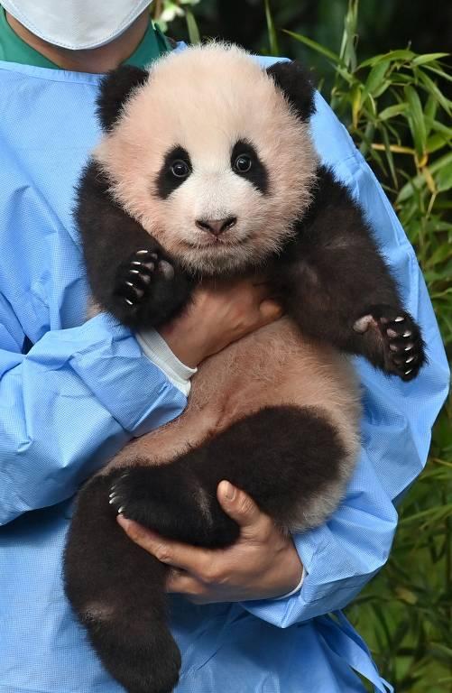 Um tratador mostra o filhote de panda Fu Bao, que nasceu 107 dias atrás na Coreia do Sul, durante uma cerimônia para revelar seu nome no Everland Amusement and Animal Park em Yongin
