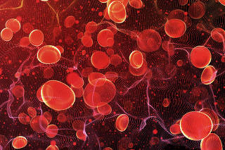 Red blood cells in travel an artery