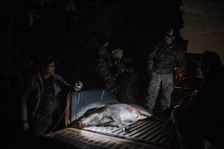 Justiça de SP suspende lei que autoriza abate de animais nocivos ao meio ambiente