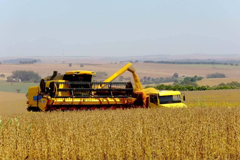 Plantação de soja no Paraná