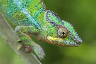 Earth's Tropical Islands: Episode 1: Madagascar