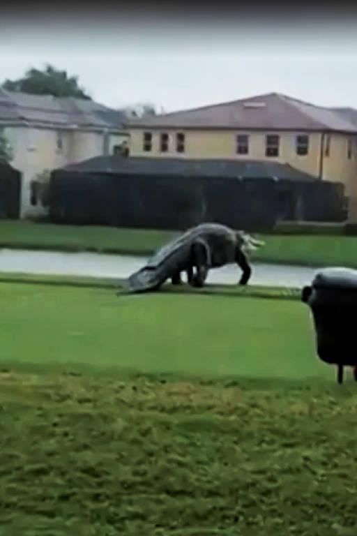 Jacaré gigante atravessa campo de golfe durante passagem de ciclone na Flórida