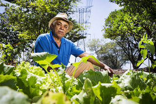 Agricultura Urbana.Hans Dieter Temp