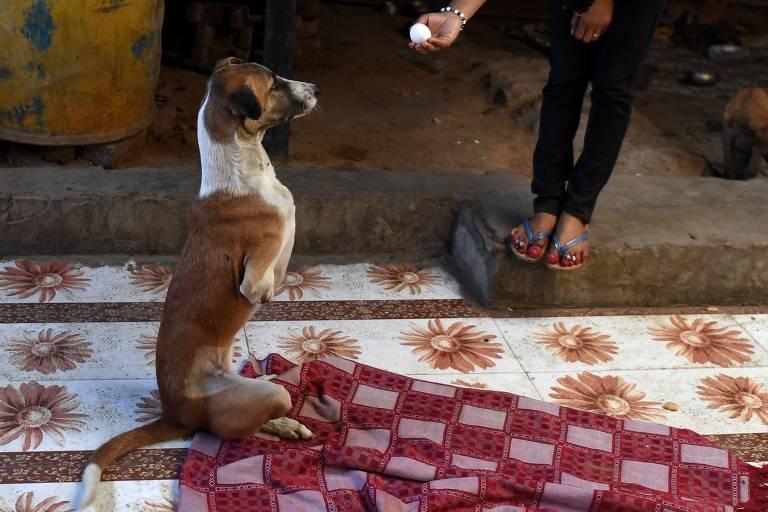 Cadela amputada após acidente com trem na Índia recebe abrigo no Reino Unido