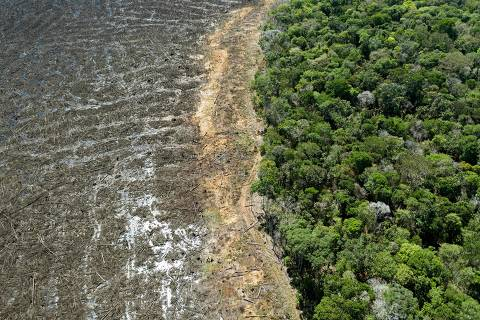 (FILES) This file photo taken on August 07, 2020 shows an aerial view of a deforested area close to Sinop, Mato Grosso State, Brazil. - Brazilian President Jair Bolsonaro, promised on Tuesday that he will publish