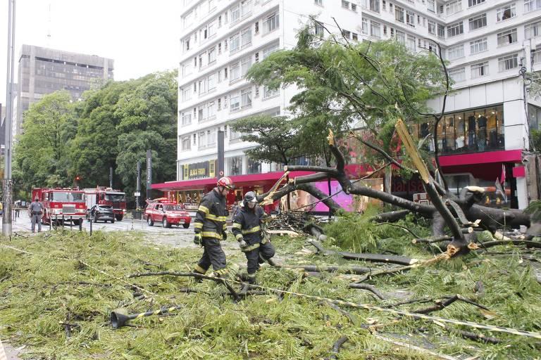 Árvore de grande porte cai na avenida Paulista; veja fotos de hoje