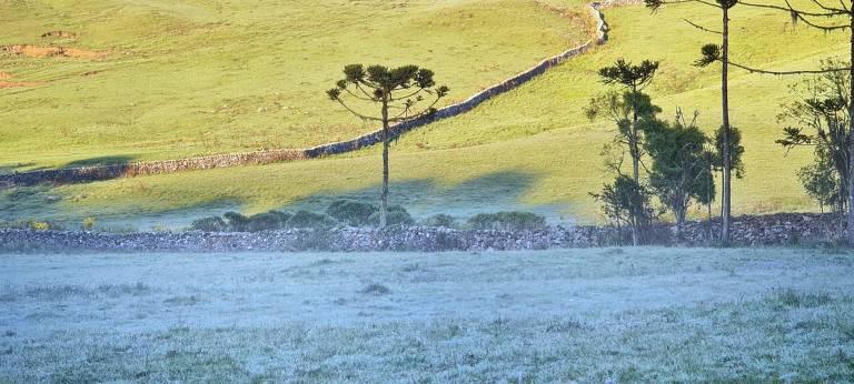 Imagem mostra vegetação coberta por uma camada fina de gelo em São Joaquim, município em Santa Catarina