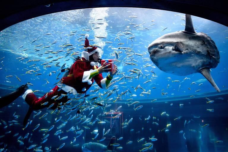 Imagem de um mergulhador vestido de Papai Noel alimenta peixes em um aquário no paraíso do mar Hakkeijima, em Yokohama