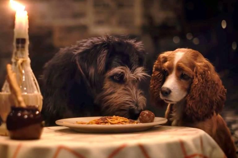 Cachorros dividindo macarrão