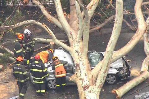 Mãe morre na frente dos filhos após árvore cair sobre carro de família