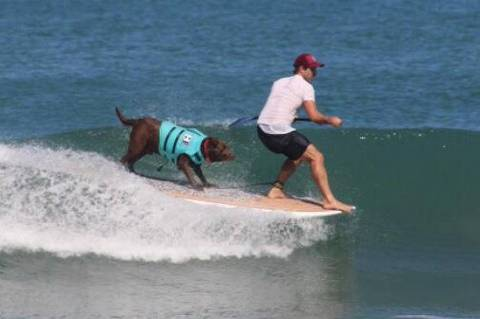O cachorro Bono e Ivan; cães surfistas brasileiros participam de competição virtual