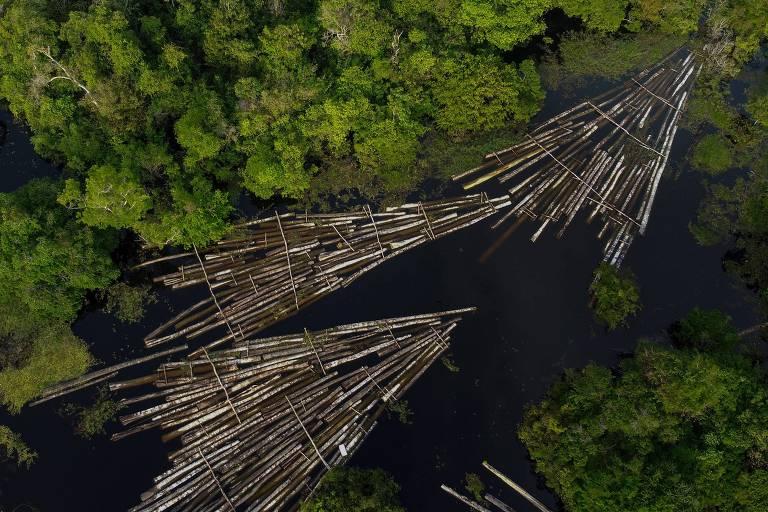 """Vista aérea de toras de madeira apreendidas pela Polícia Militar do Amazonas no rio Manacapuru; vemos um rio de águas escuras, margeado de floresta dos dois lados, com toras amarradas em 3 conjuntos em forma de """"V"""", boiando na água"""