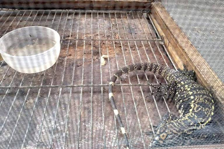 Casal é preso por manter animais silvestres em cativeiro